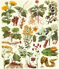 Лекарственные растения и их